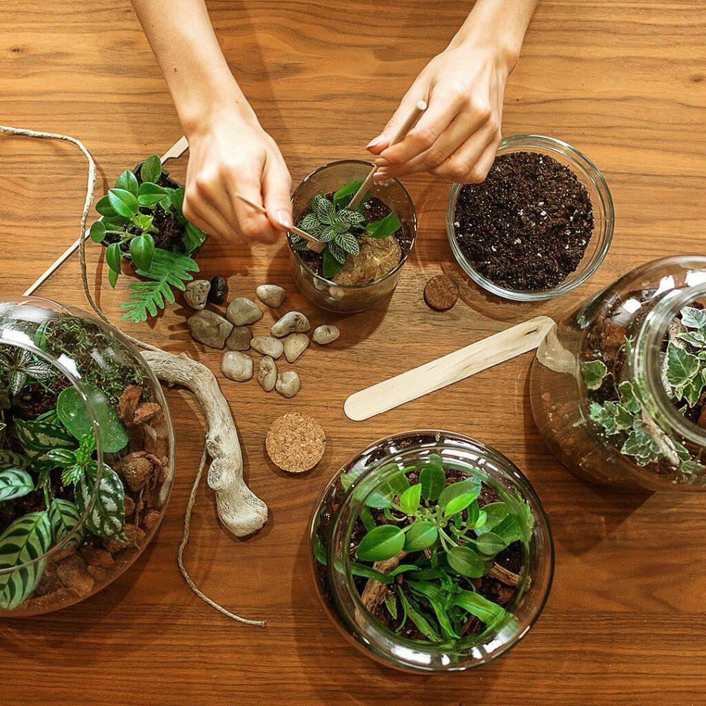 doremiza biljke radionica