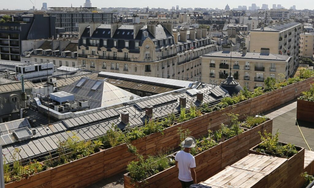paris green terace plants man walking