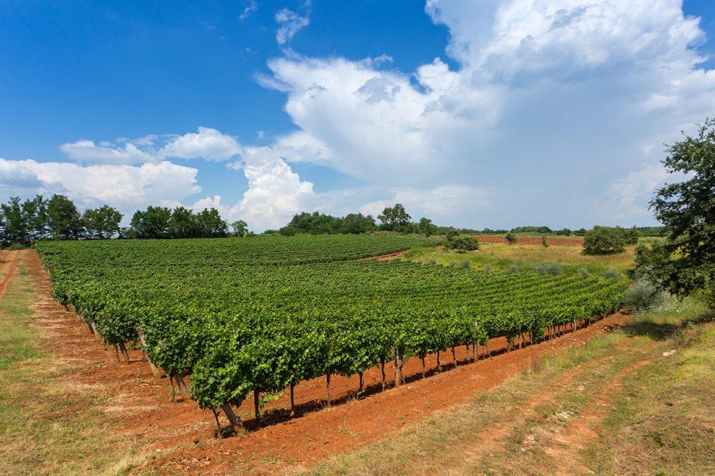 oh  wines vinogradi vižinada